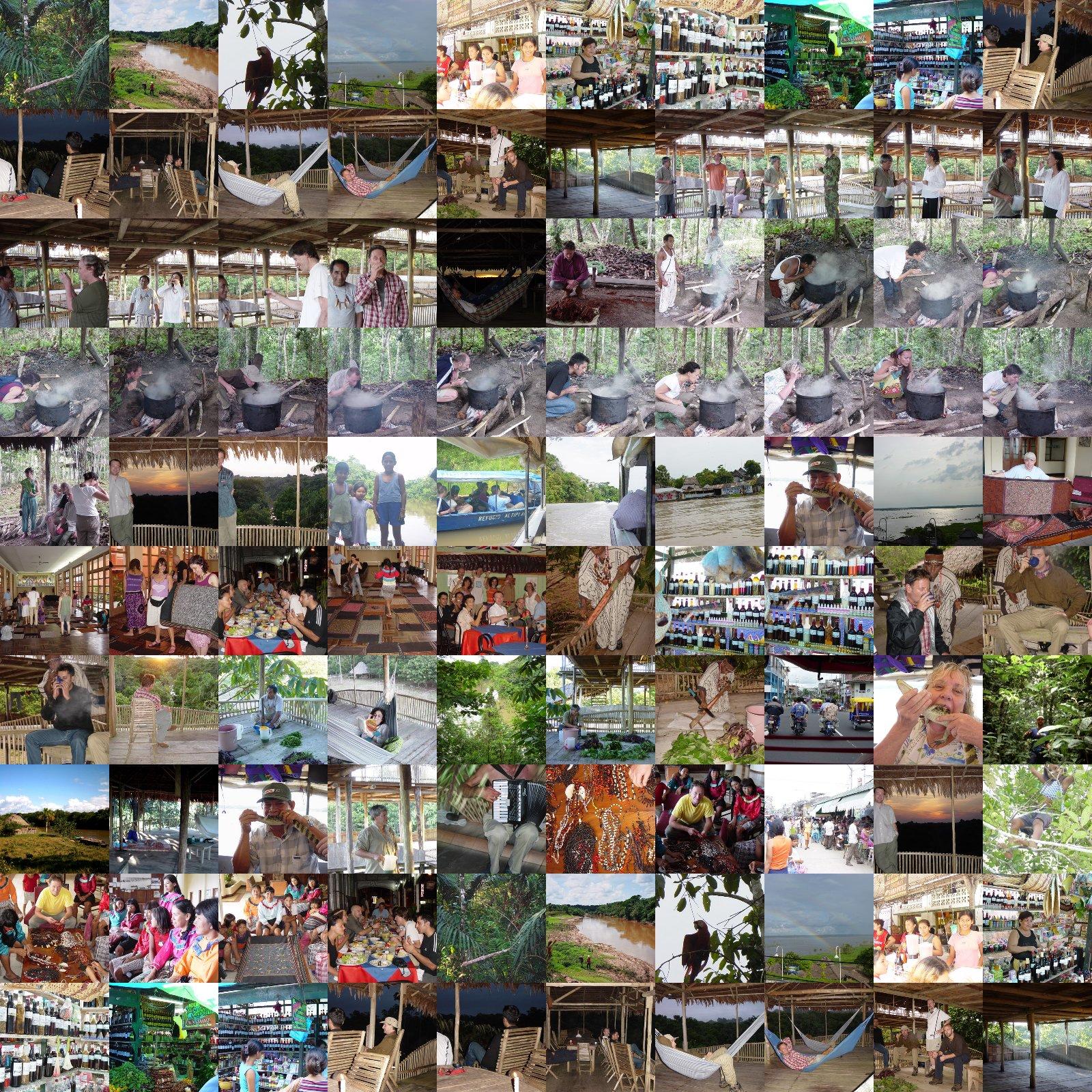 amazon rainforest plants collage. ayahuasca retreat february 2003 amazon rainforest peru plants collage t