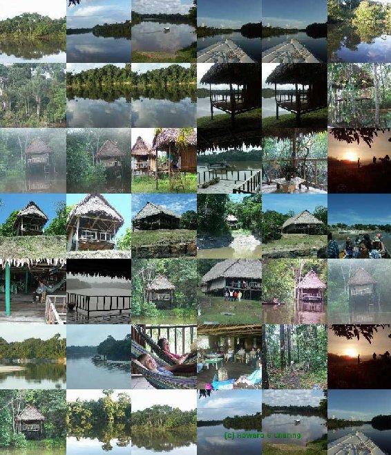 amazon rainforest plants collage. ayahuasca retreat centre mishana amazon rainforest peru plants collage