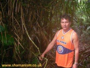 Shipibo Shaman with Ajo Sacha plant