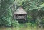 My perfect jungle palace